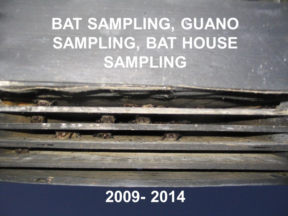 BAT SAMPLING, GUANO SAMPLING, BAT HOUSE SAMPLING 2009- 2014