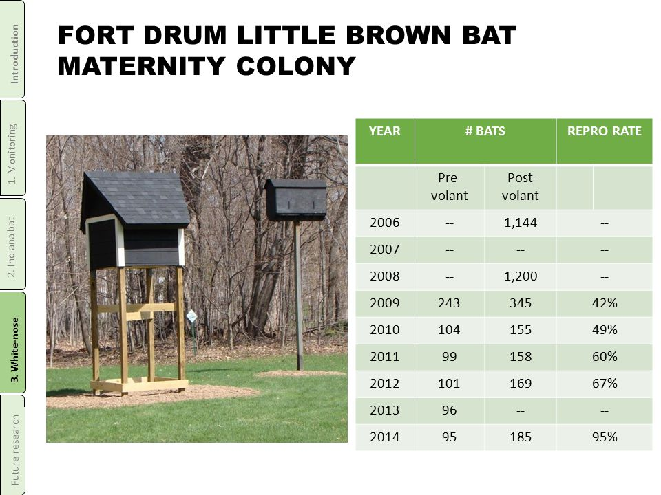 FORT DRUM LITTLE BROWN BAT MATERNITY COLONY YEAR# BATSREPRO RATE Pre- volant Post- volant 2006--1,144-- 2007-- 2008--1,200-- 200924334542% 201010415549% 20119915860% 201210116967% 201396-- 20149518595% Introduction 1.