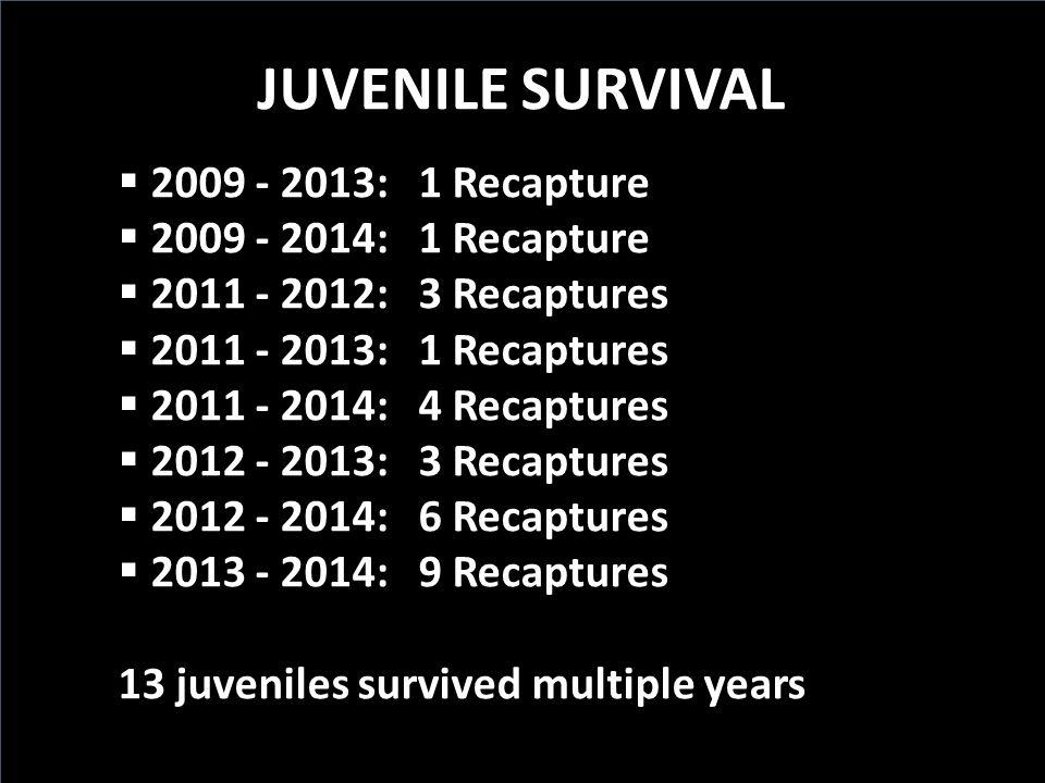 JUVENILE SURVIVAL  2009 - 2013: 1 Recapture  2009 - 2014: 1 Recapture  2011 - 2012: 3 Recaptures  2011 - 2013: 1 Recaptures  2011 - 2014: 4 Recaptures  2012 - 2013: 3 Recaptures  2012 - 2014: 6 Recaptures  2013 - 2014: 9 Recaptures 13 juveniles survived multiple years