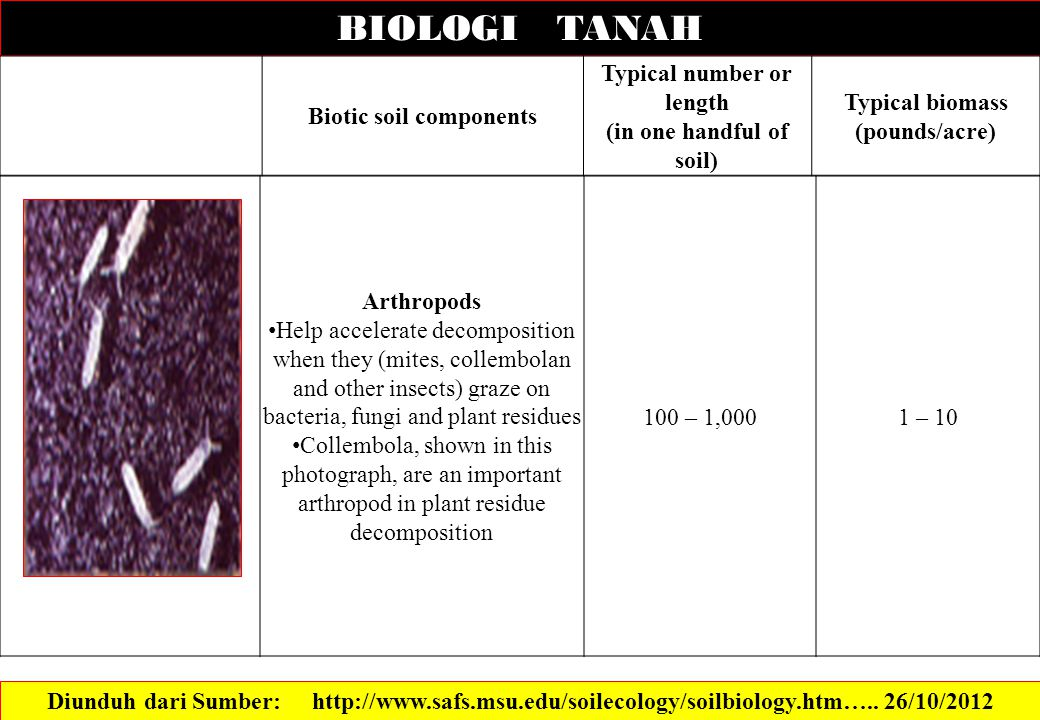 BIOLOGI TANAH Diunduh dari Sumber: http://www.safs.msu.edu/soilecology/soilbiology.htm…..