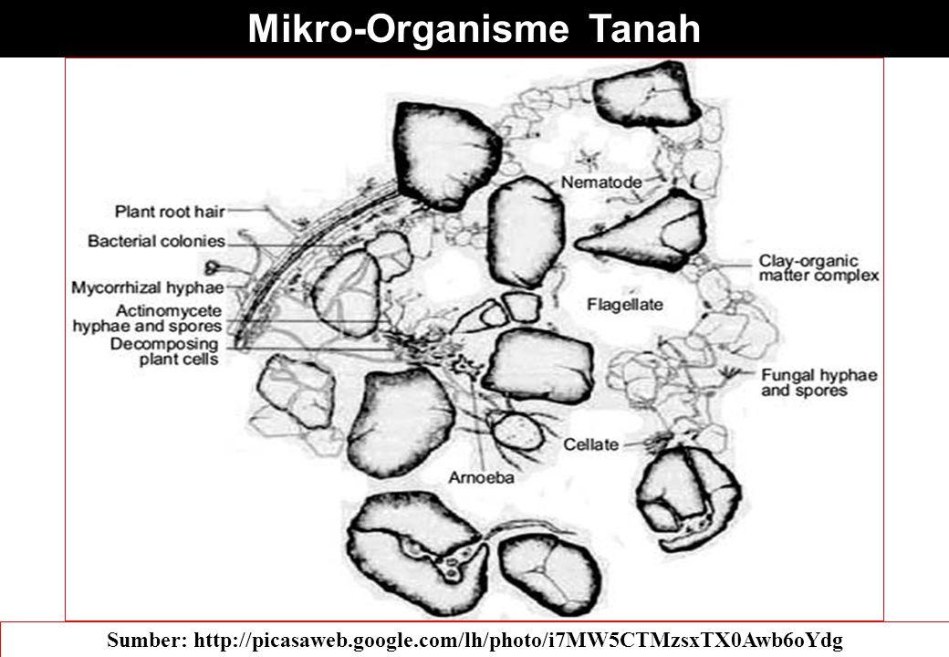 Mikro-Organisme Tanah Sumber: http://picasaweb.google.com/lh/photo/i7MW5CTMzsxTX0Awb6oYdg