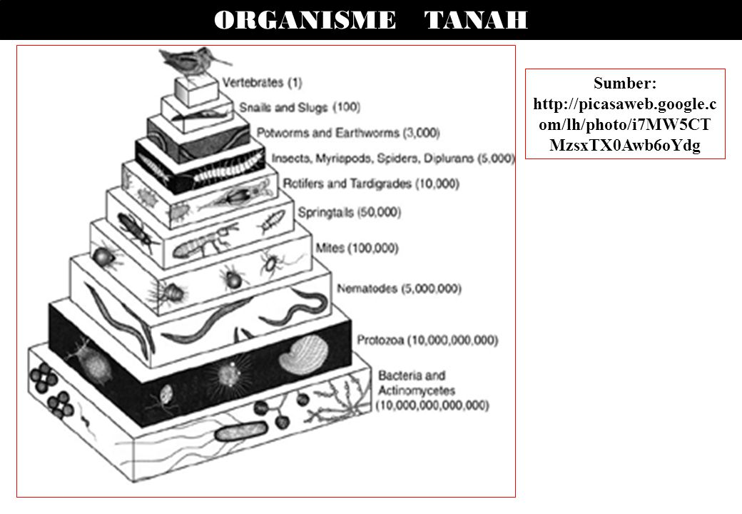 ORGANISME TANAH Sumber: http://picasaweb.google.c om/lh/photo/i7MW5CT MzsxTX0Awb6oYdg