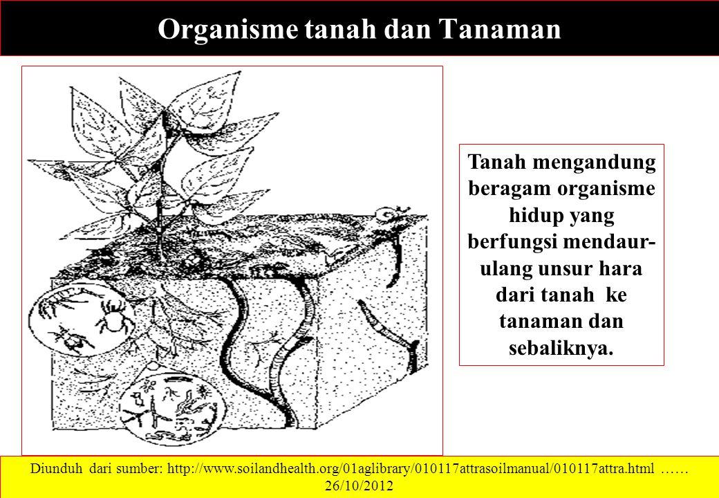 Organisme tanah dan Tanaman Diunduh dari sumber: http://www.soilandhealth.org/01aglibrary/010117attrasoilmanual/010117attra.html …… 26/10/2012 Tanah mengandung beragam organisme hidup yang berfungsi mendaur- ulang unsur hara dari tanah ke tanaman dan sebaliknya.