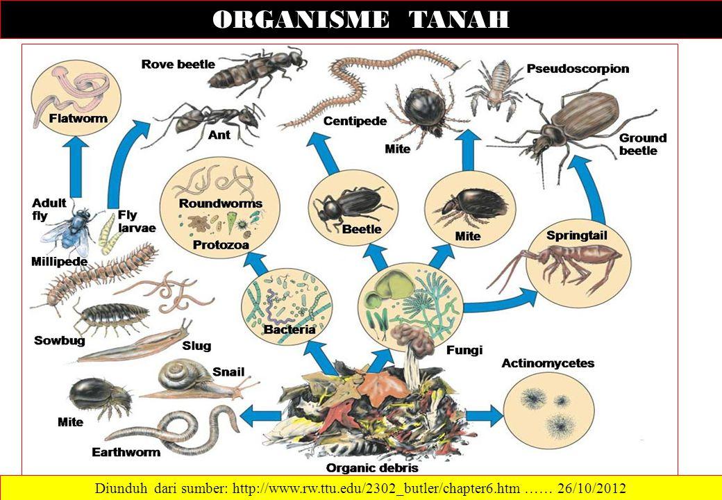 ORGANISME TANAH Diunduh dari sumber: http://www.rw.ttu.edu/2302_butler/chapter6.htm …… 26/10/2012