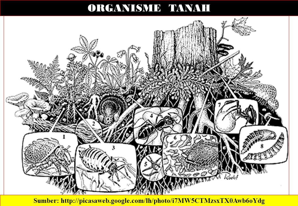 ORGANISME TANAH Sumber: http://picasaweb.google.com/lh/photo/i7MW5CTMzsxTX0Awb6oYdg