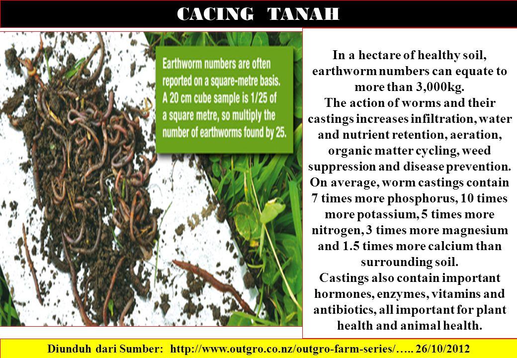 CACING TANAH Diunduh dari Sumber: http://www.outgro.co.nz/outgro-farm-series/…..