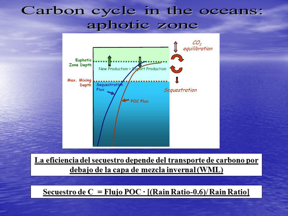 La eficiencia del secuestro depende del transporte de carbono por debajo de la capa de mezcla invernal (WML) Secuestro de C = Flujo POC · [(Rain Ratio-0.6)/ Rain Ratio]