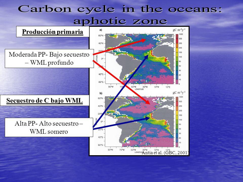 Producción primaria Secuestro de C bajo WML Moderada PP- Bajo secuestro – WML profundo Alta PP- Alto secuestro – WML somero Antia et al.