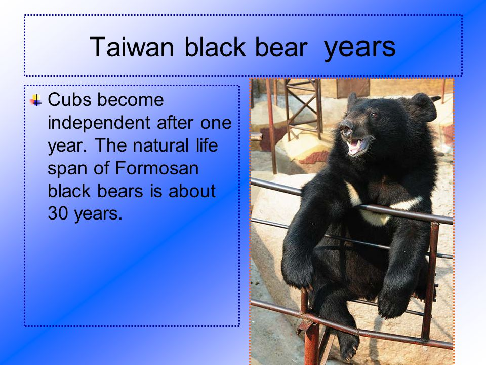 Taiwan black bear s Life habit .
