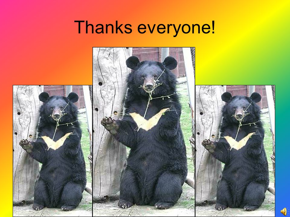 Taiwan black bear s behavior .