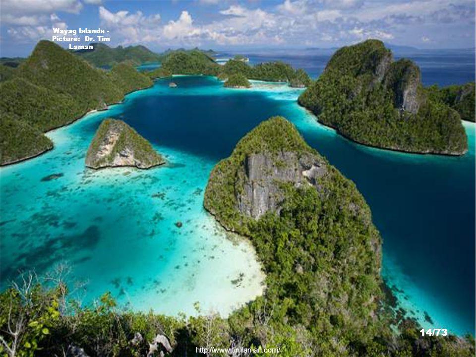 http://www.divetrip.com/irian/irianrpt.htm Raja Ampat Islands - Picture: Ken Knezick 13/73