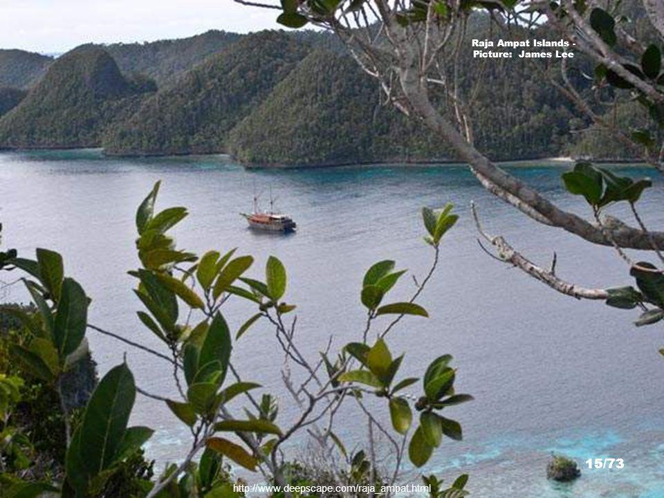 http://www.timlaman.com/ Wayag Islands - Picture: Dr. Tim Laman 14/73