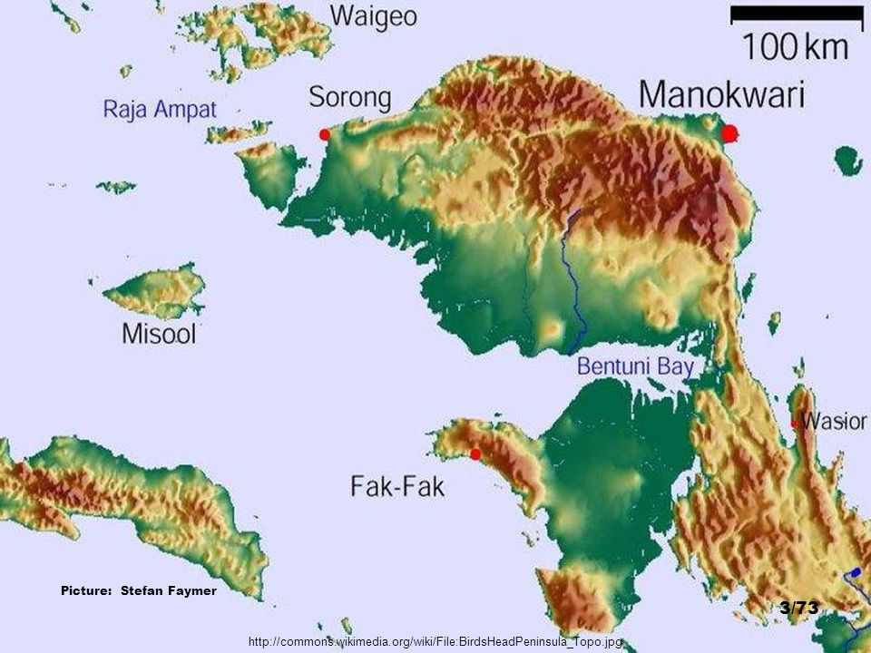 http://www.timlaman.com/ Misool Island, Raja Ampat - Picture: Dr. Tim Laman 63/73