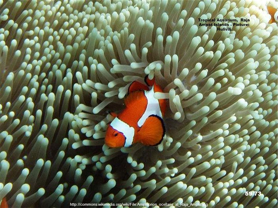 http://www.deepscape.com/raja_ampat.html Raja Ampat Islands - Picture: James Lee 58/73