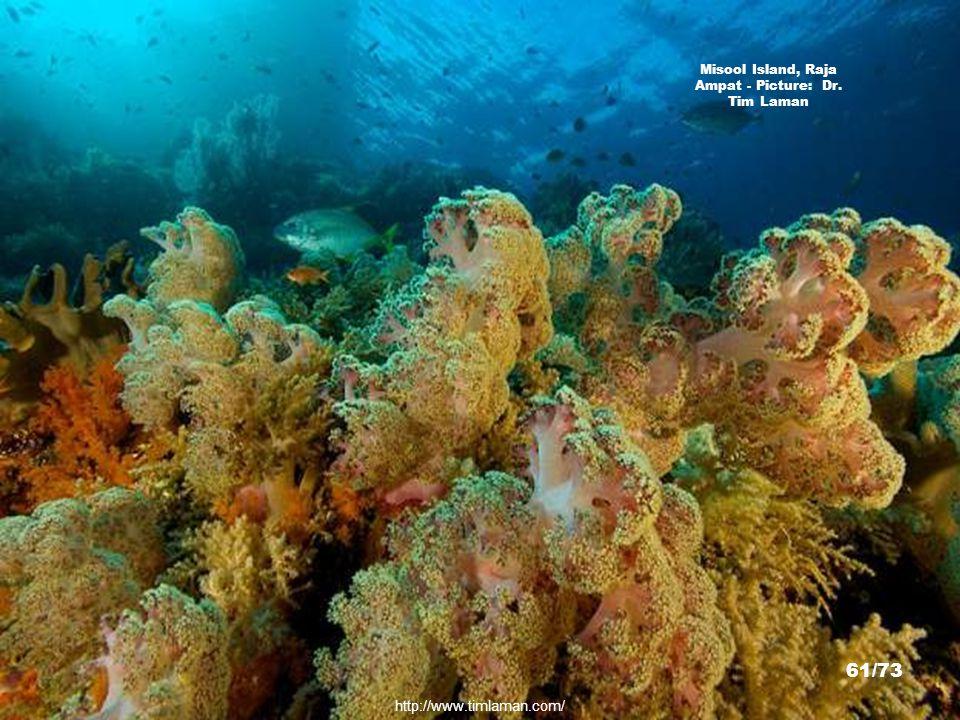 http://www.timlaman.com/ Misool Island, Raja Ampat - Picture: Dr. Tim Laman 60/73