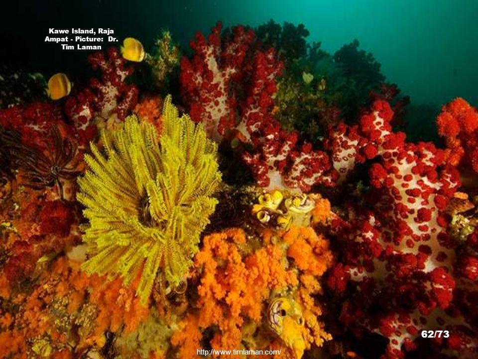 http://www.timlaman.com/ Misool Island, Raja Ampat - Picture: Dr. Tim Laman 61/73