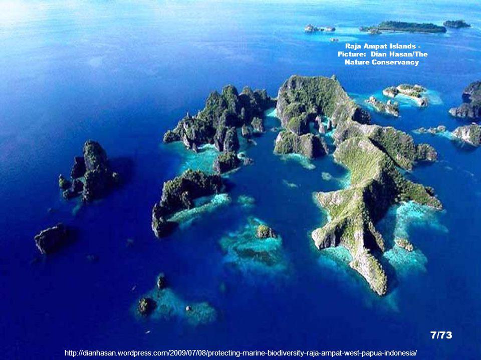 http://dianhasan.wordpress.com/2009/07/08/protecting-marine-biodiversity-raja-ampat-west-papua-indonesia/ Raja Ampat Islands - Picture: Dian Hasan/The Nature Conservancy 7/73