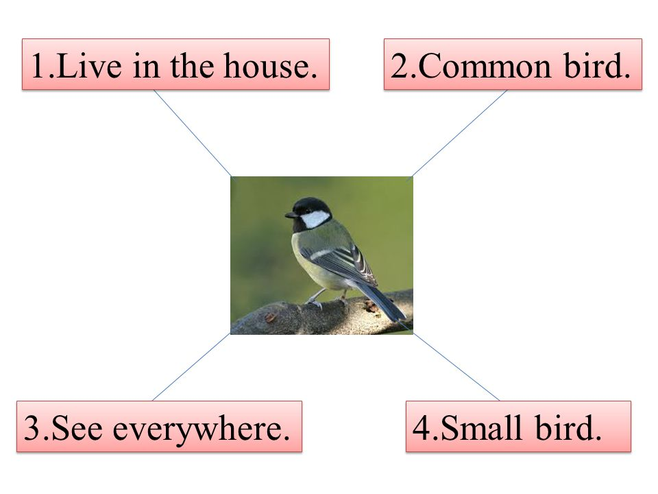 1.Live in the house. 2.Common bird. 3.See everywhere. 4.Small bird.