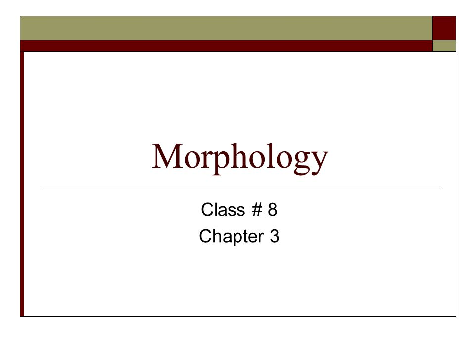 Morphology Class # 8 Chapter 3