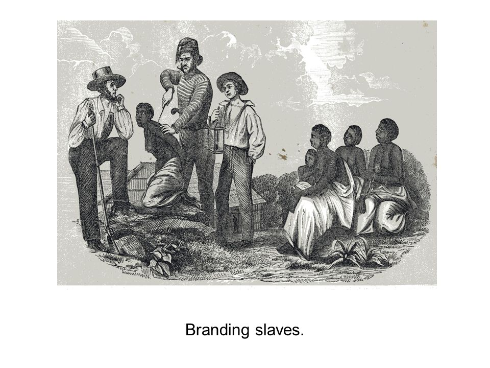 Branding slaves.