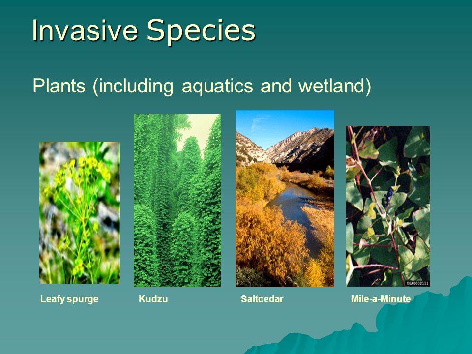 Invasive Species Plants (including aquatics and wetland) Leafy spurgeSaltcedarKudzuMile-a-Minute