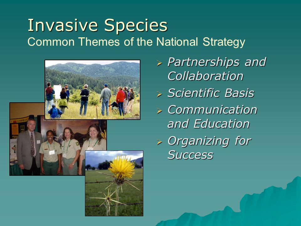 Invasive Species Invasive Species Common Themes of the National Strategy  Partnerships and Collaboration  Scientific Basis  Communication and Educa