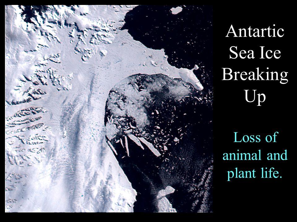Coral Bleaching – Dead ocean zones, mass extinctions
