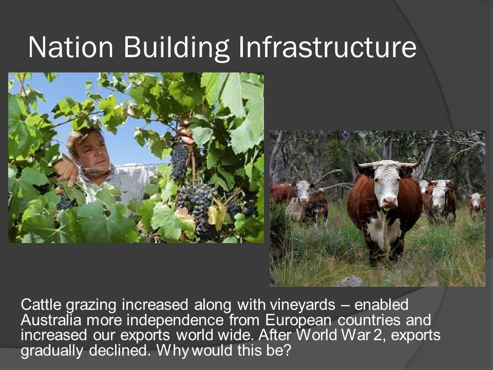 Nation Building Infrastructure Cattle grazing increased along with vineyards – enabled Australia more independence from European countries and increased our exports world wide.