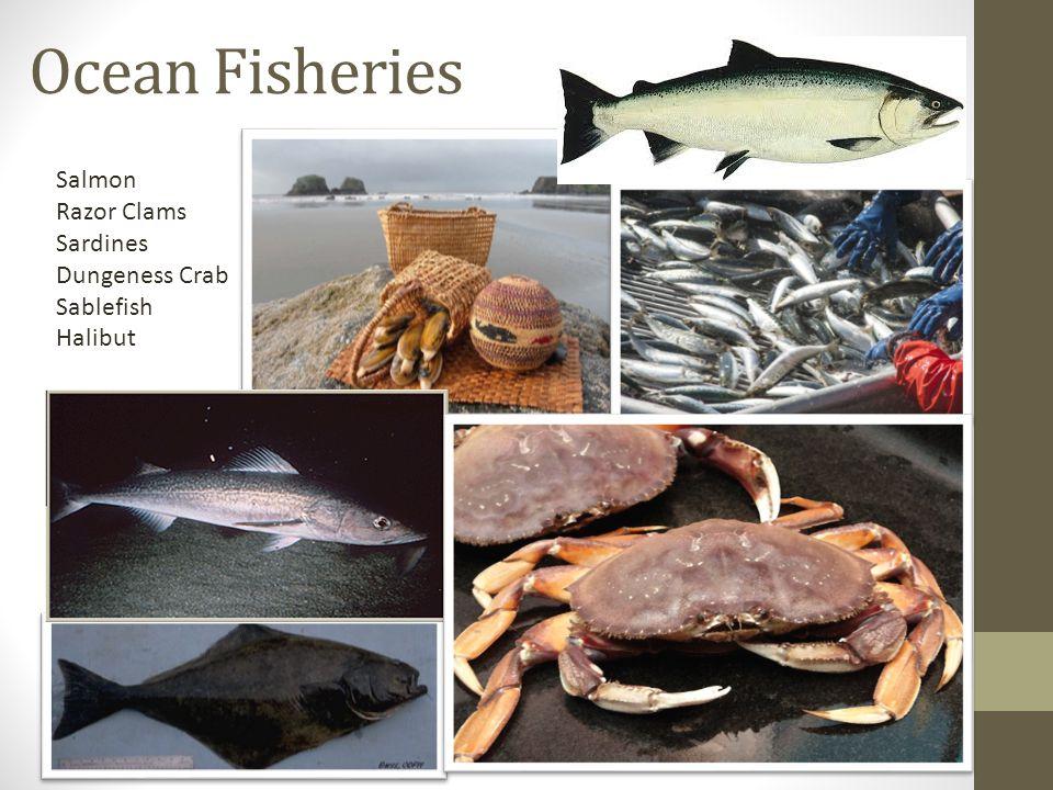 Ocean Fisheries Salmon Razor Clams Sardines Dungeness Crab Sablefish Halibut
