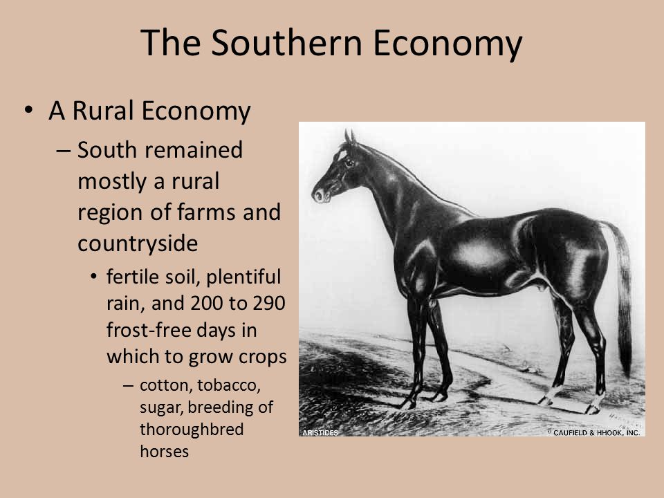 The Southern Economy A Rural Economy – South remained mostly a rural region of farms and countryside fertile soil, plentiful rain, and 200 to 290 fros