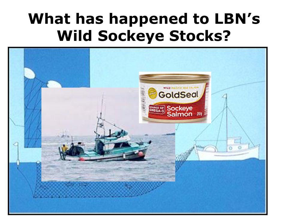 What has happened to LBN's Wild Sockeye Stocks?