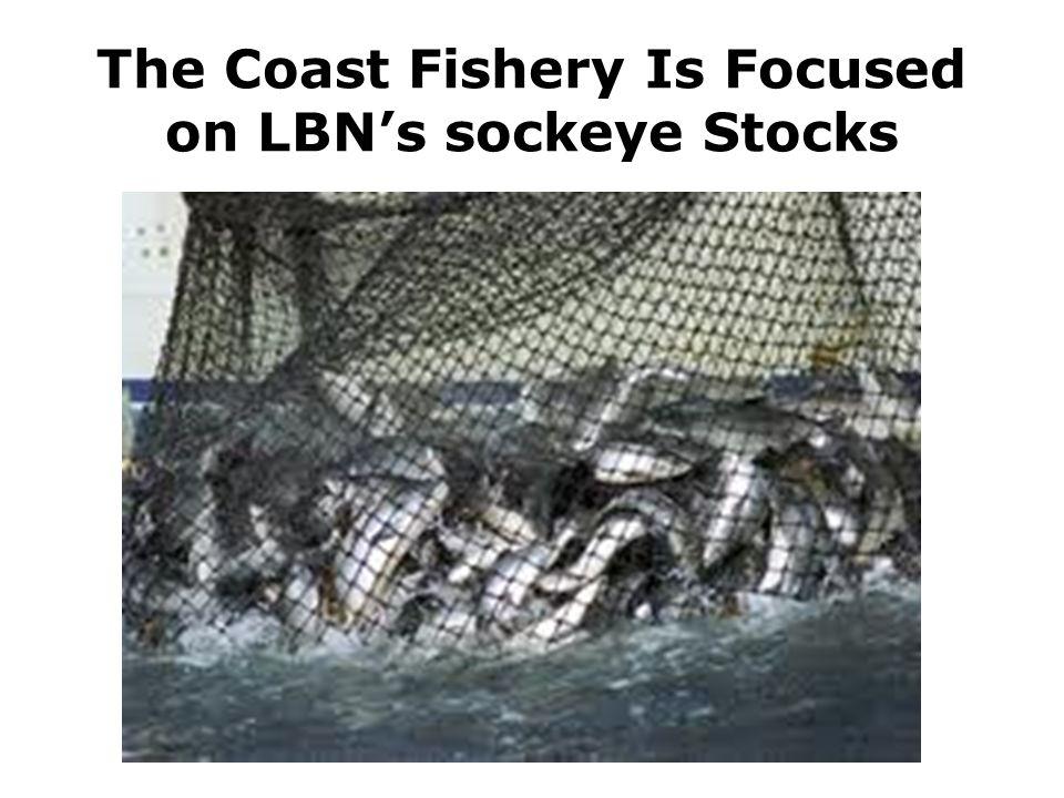 The Coast Fishery Is Focused on LBN's sockeye Stocks
