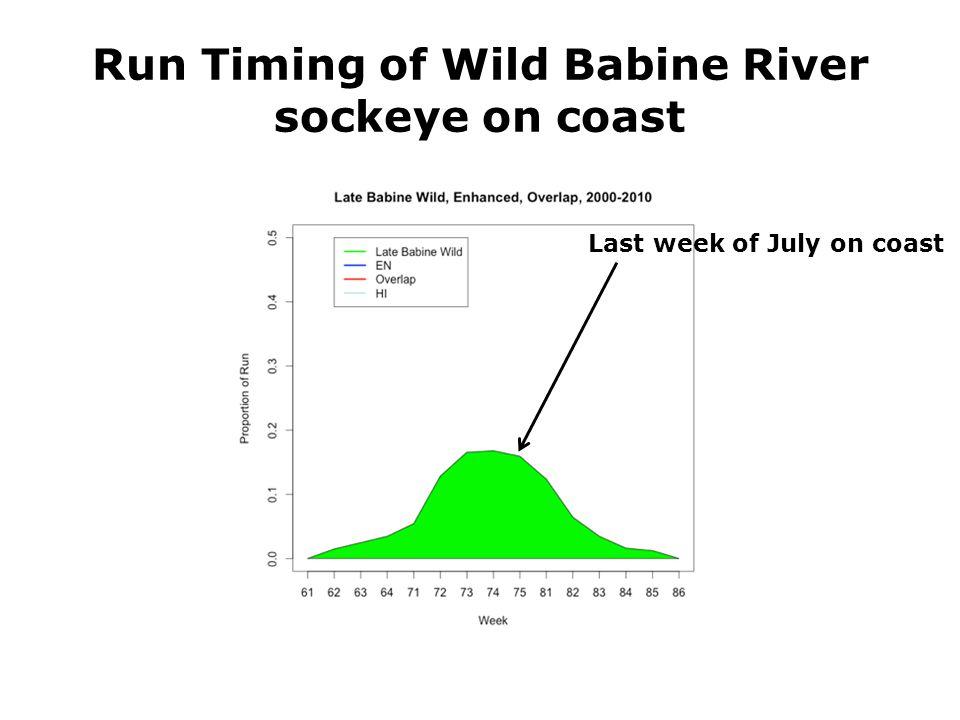 Run Timing of Wild Babine River sockeye on coast Last week of July on coast