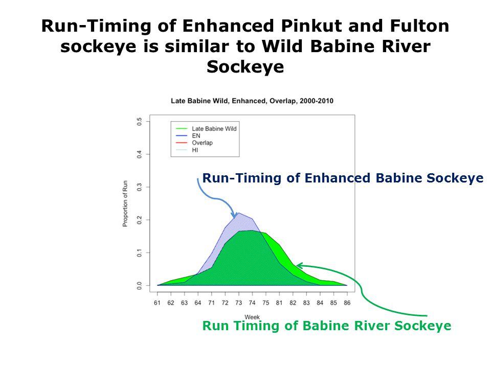 Run-Timing of Enhanced Pinkut and Fulton sockeye is similar to Wild Babine River Sockeye Run Timing of Babine River Sockeye Run-Timing of Enhanced Babine Sockeye
