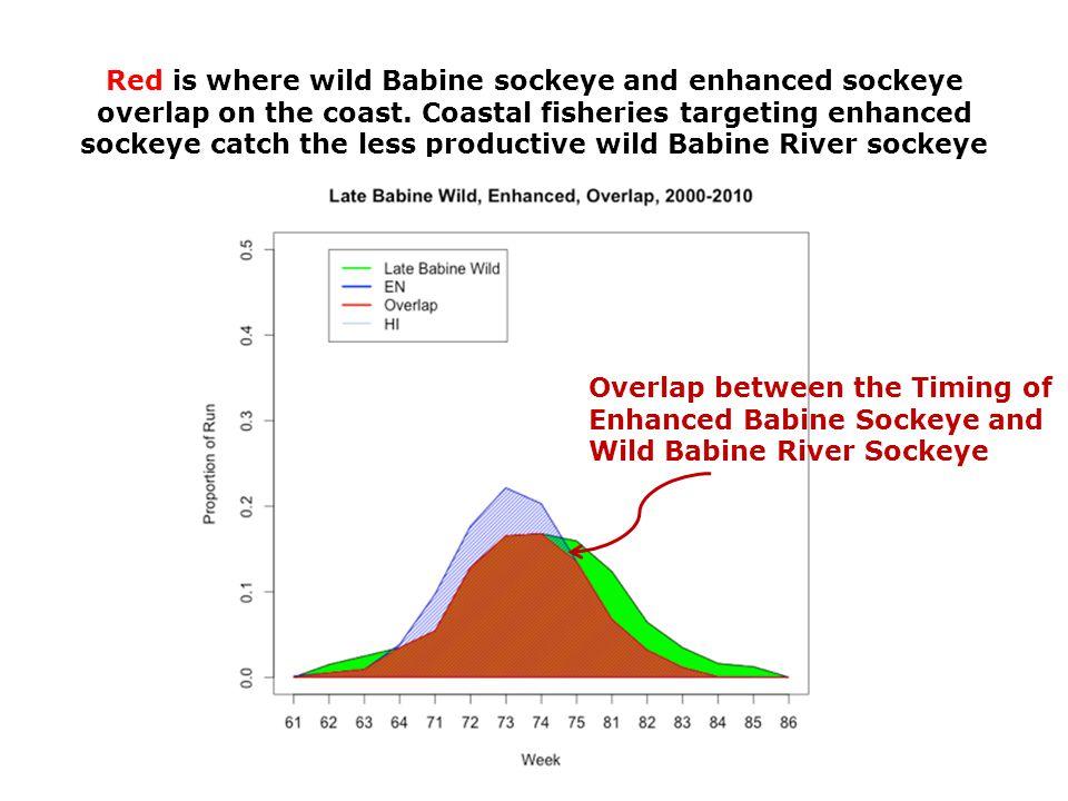 Red is where wild Babine sockeye and enhanced sockeye overlap on the coast.