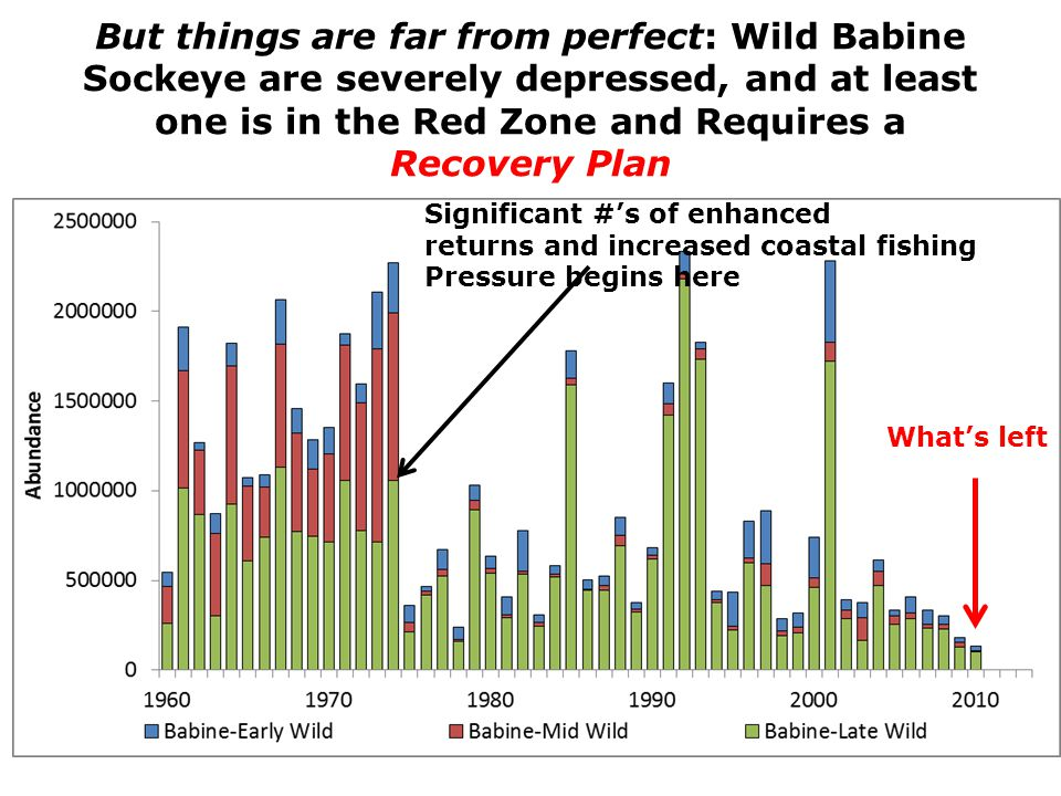 But things are far from perfect: Wild Babine Sockeye are severely depressed, and at least one is in the Red Zone and Requires a Recovery Plan Significant #'s of enhanced returns and increased coastal fishing Pressure begins here What's left