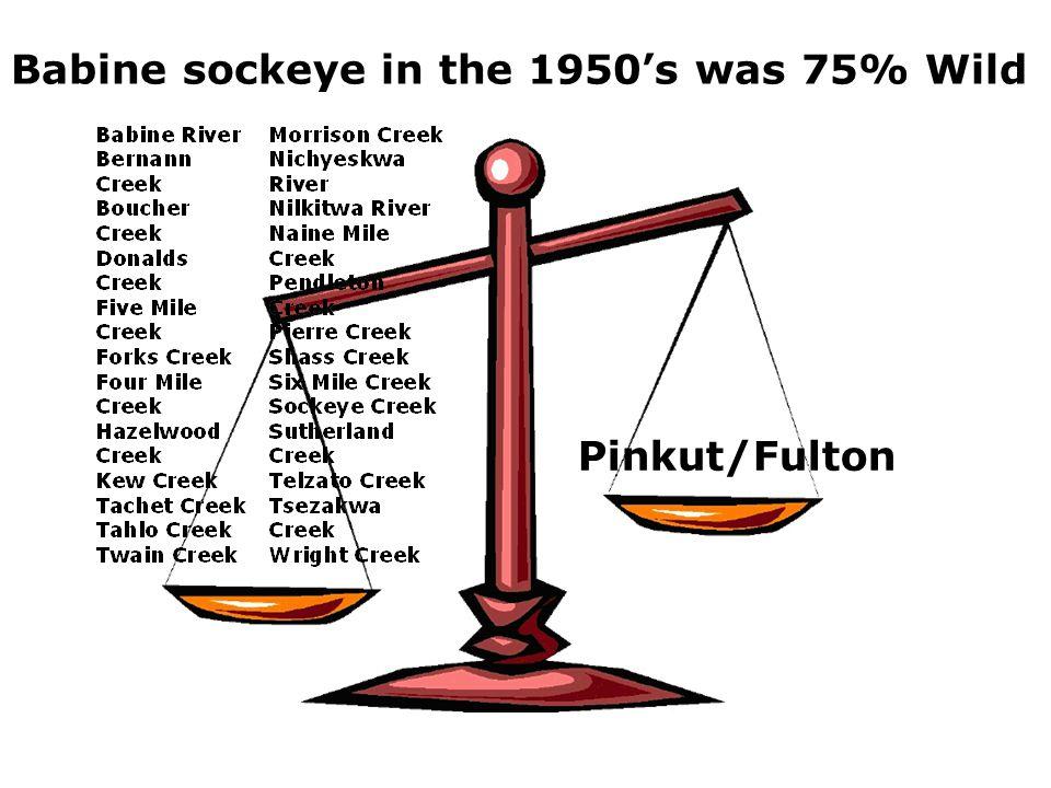 Pinkut/Fulton Babine sockeye in the 1950's was 75% Wild