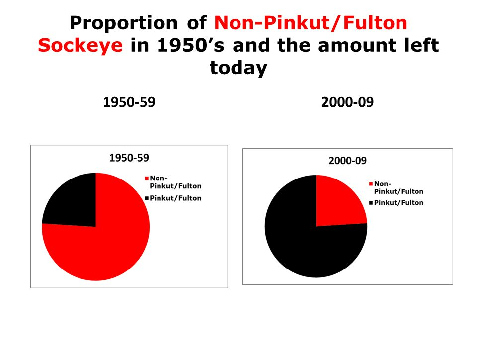 Proportion of Non-Pinkut/Fulton Sockeye in 1950's and the amount left today 1950-592000-09