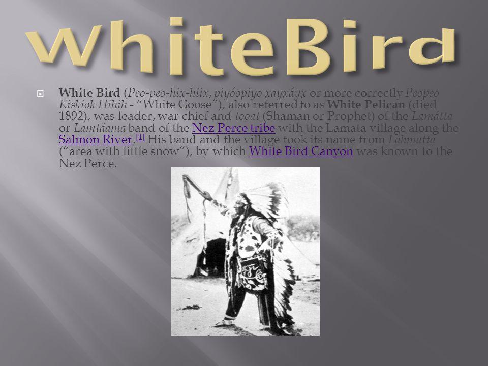 """ White Bird ( Peo-peo-hix-hiix, piyóopiyo x ̣ ayx ̣ áyx ̣ or more correctly Peopeo Kiskiok Hihih - """"White Goose""""), also referred to as White Pelican"""