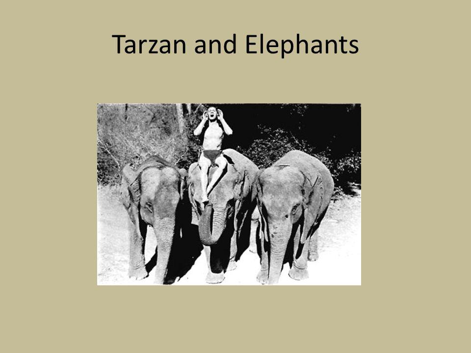 Tarzan and Elephants