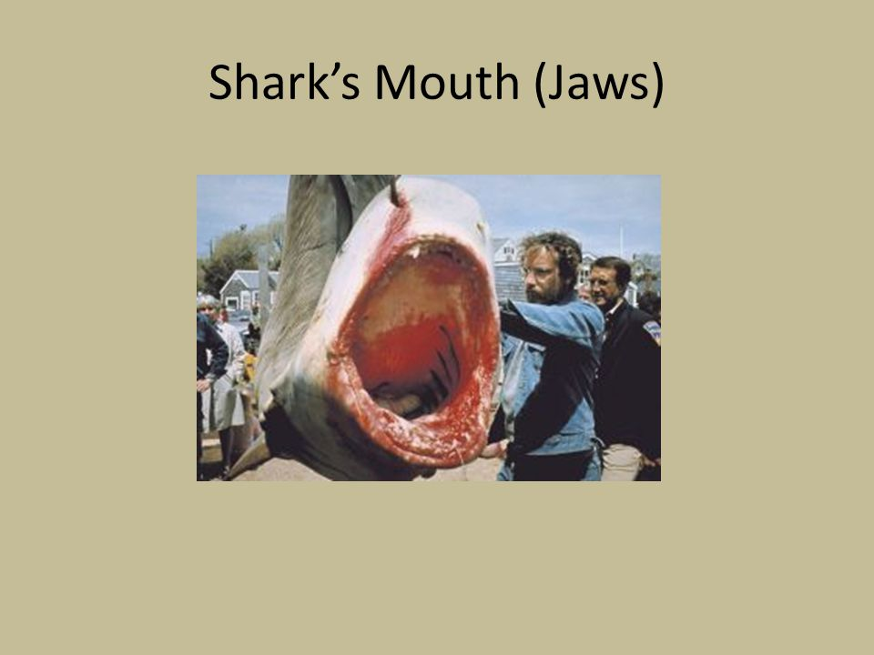 Shark's Mouth (Jaws)