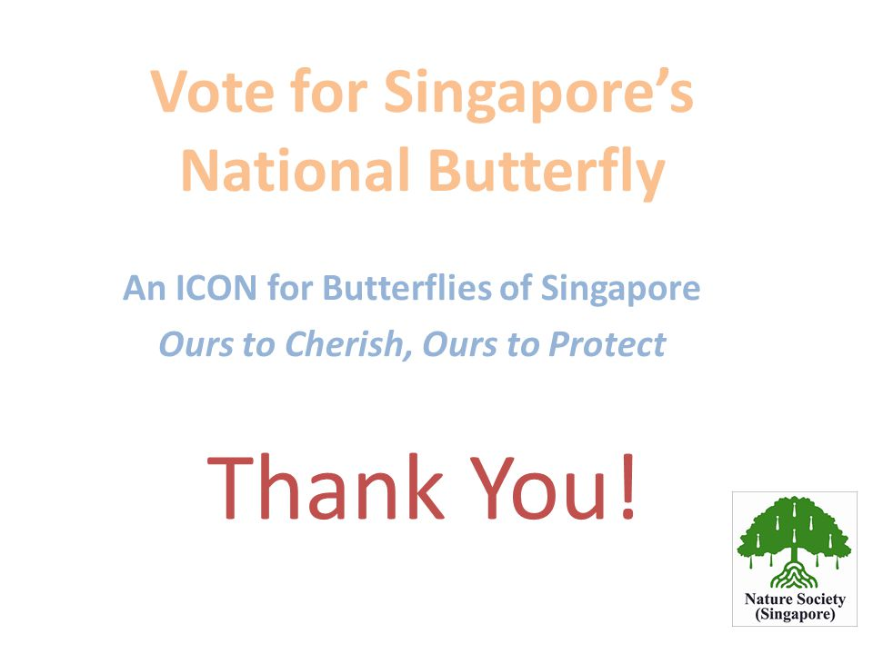 Vote for Singapore's National Butterfly An ICON for Butterflies of Singapore Ours to Cherish, Ours to Protect Thank You!