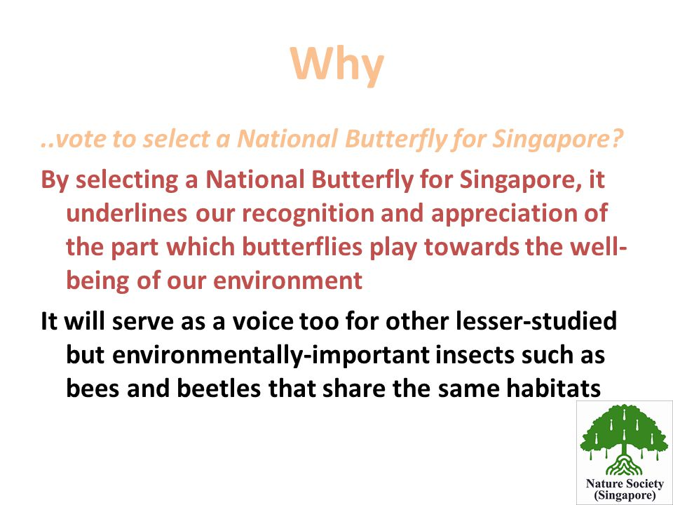 Why..vote to select a National Butterfly for Singapore? By selecting a National Butterfly for Singapore, it underlines our recognition and appreciatio