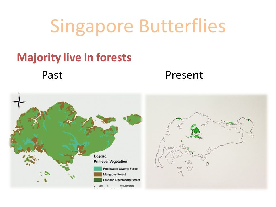 Singapore Butterflies Majority live in forests Past Present