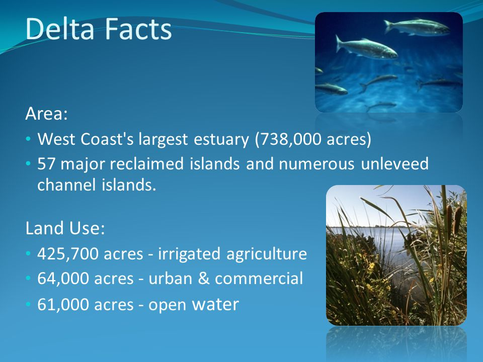 Delta Facts Area: West Coast s largest estuary (738,000 acres) 57 major reclaimed islands and numerous unleveed channel islands.