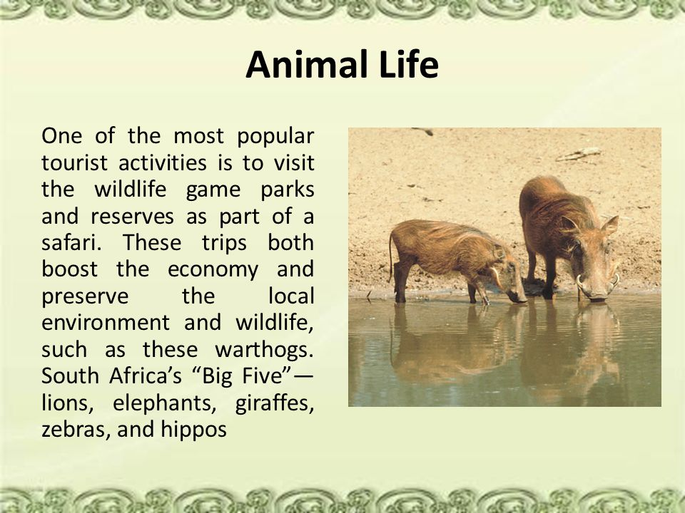 Animal Life One of the most popular tourist activities is to visit the wildlife game parks and reserves as part of a safari.