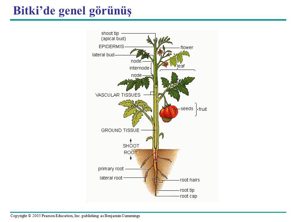 Gravitropism in plants