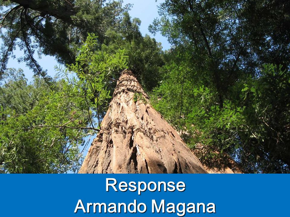 Response Armando Magana