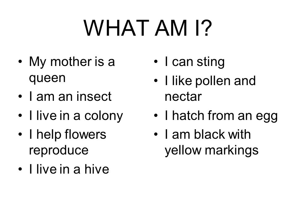WHAT AM I? My mother is a queen I am an insect I live in a colony I help flowers reproduce I live in a hive I can sting I like pollen and nectar I hat