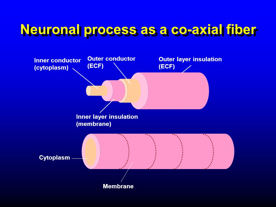 Neuronal process as a co-axial fiber Inner layer insulation (membrane) Inner conductor (cytoplasm) Outer conductor (ECF) Outer layer insulation (ECF)